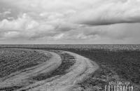 Ansel Adams fotografia de natureza e sua preocupação com o meio ambiente