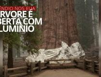Árvore mais larga do mundo é coberta com alumínio para ficar protegida de incêndio