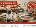 CAMPANHA DE VACINAÇÃO CANINA EM CORUMBAÍBA