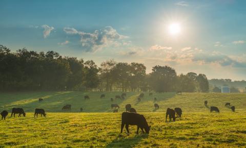 Exportações do agronegócio ultrapassam US$ 100 bilhões em 2018