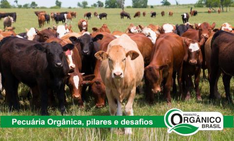 Pecuária Orgânica: principais pilares e desafios