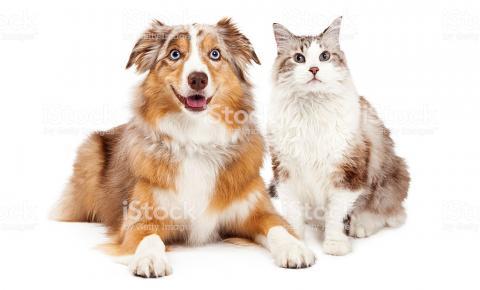 A tendência pet friendly movimenta os segmentos de alimentação, serviços e saúde