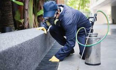 A importância de prevenção no controle de pragas urbanas