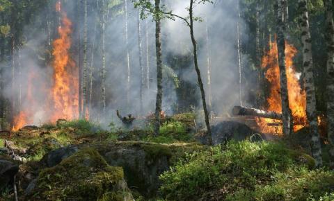 Queimadas na Amazônia: efeitos prejudiciais na saúde