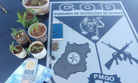 PR/COD REALIZA APREENSÃO DE TRES MENORES POR TRAFICO DE ENTORPECENTES  E CULTIVO DE MACONHA