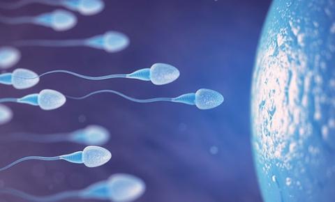 Homens congelam sêmen para preservar sua fertilidade