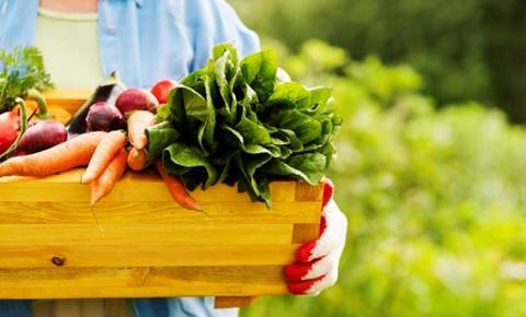 Por que as pessoas deveriam preferir frutas e verduras orgânicas?