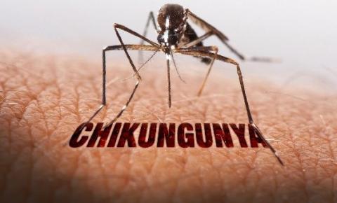 Ceará vive epidemia de Chikungunya com quase 60 mil casos confirmados