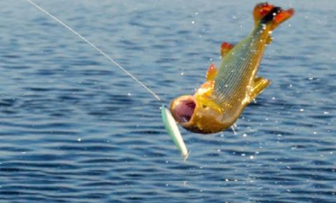 Goiás vai sediar torneio internacional de pesca esportiva