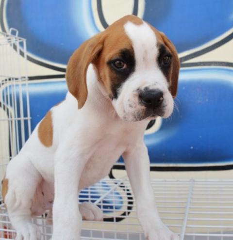 Reino Unido proíbe venda de filhotes de cães e gatos em pet shops,